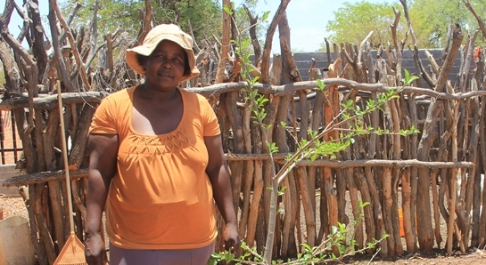 2017 Jan: Baobab Guardians: our baobab babies are flourishing!