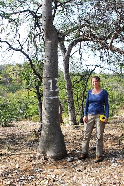 Measuring Baobab girth