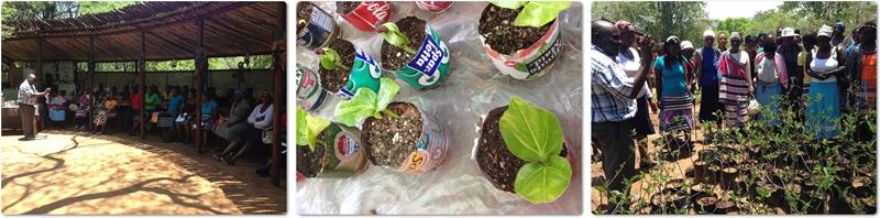2013 Dec: 50 new baobab babies!