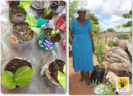 2014 Mar: Baobab seedlings get big ideas!