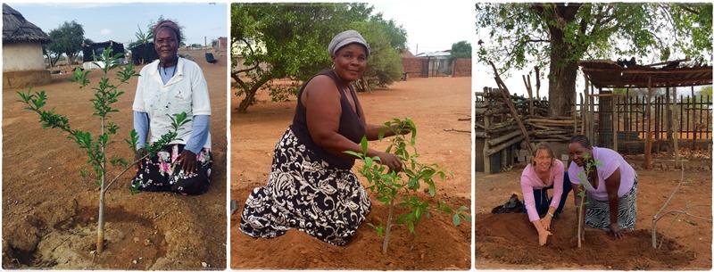 Blog 2015 11 Joyce Phungo- Julia Mambeda - Miriam Mulaudzi combo 800 x 305