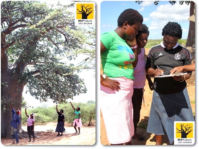 Monitoring with baobab harvesters
