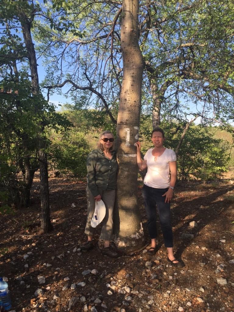 Tree 13 with Diana