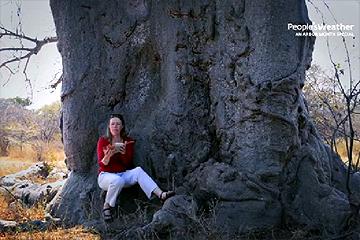 Baobab tree stories