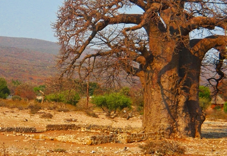 More wisdom of the Baobab tree