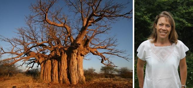 Arbour Month: Sarah's brilliant tree stories