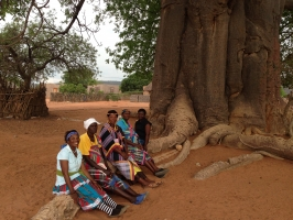 The fertility magic of Baobabs