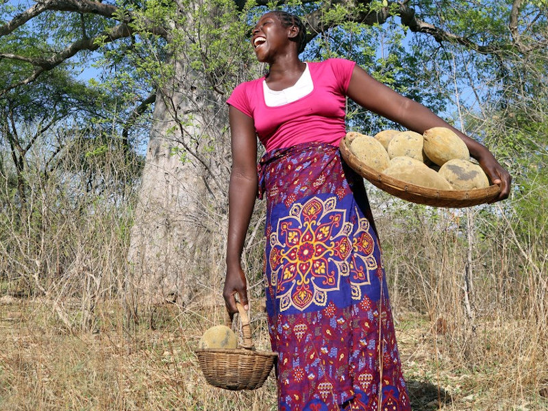 Zimbabwean Entrepreneur To Create Global Market For Baobab