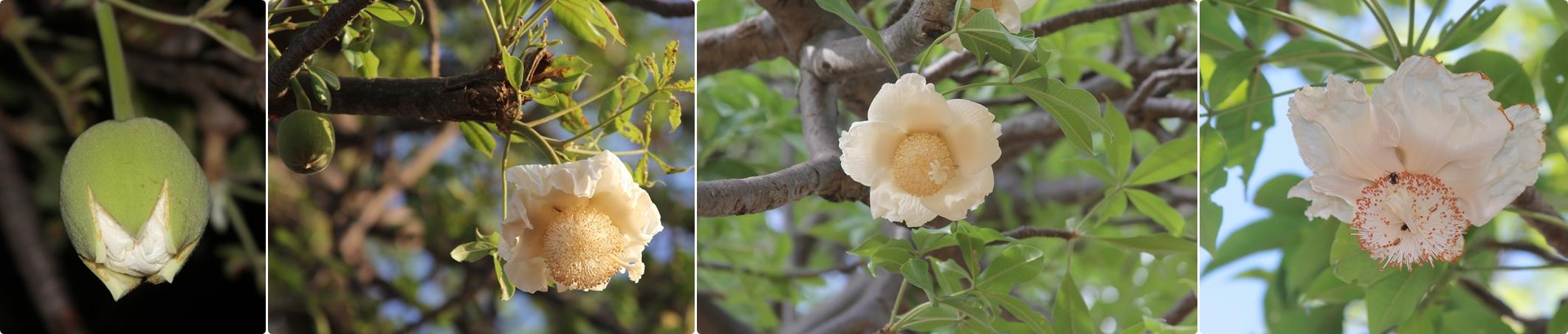 Tis Flowering Season!