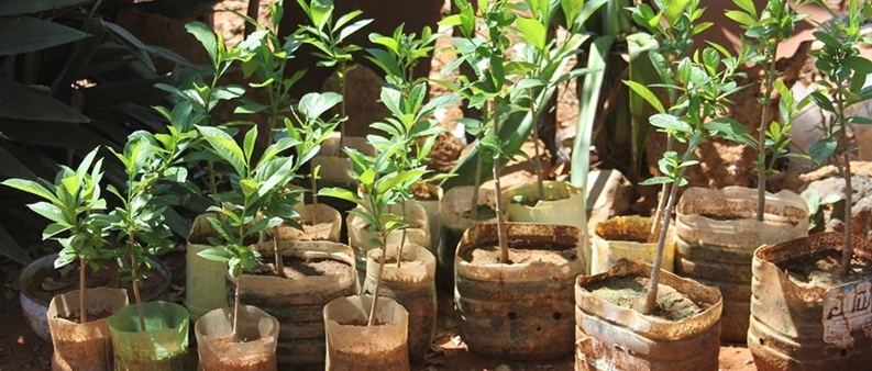 2016 Mar: Baobab Guardians: from seedling to sapling – it's about being inspired!