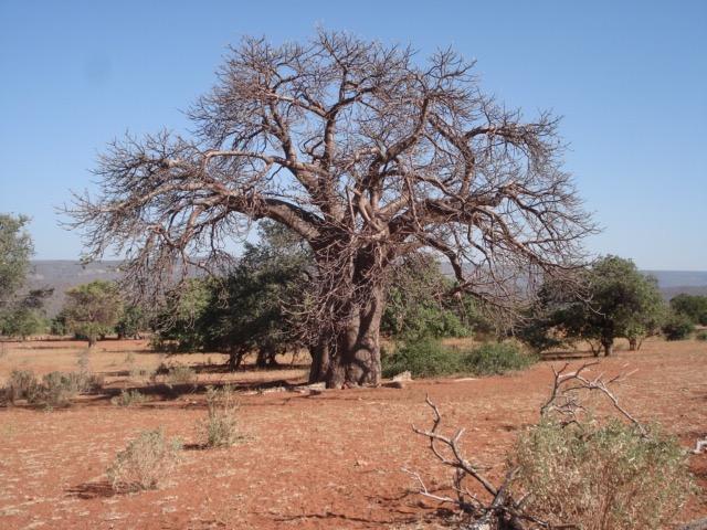 world desertification day