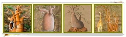 Fine Art Baobab Inspirations