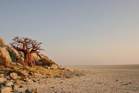 Kubu Island, Makgadikgadi Pan: where rock, salt and baobabs meet