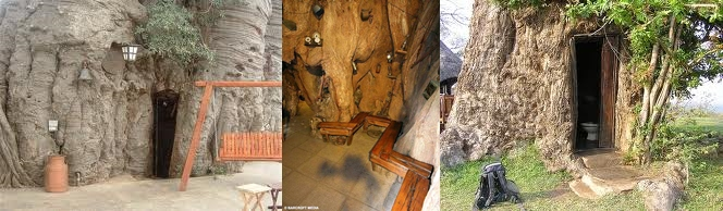 Living in a baobab tree