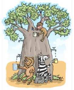 baobab water storage
