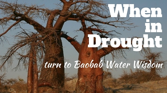 World Water Day: when in drought, consult a baobab tree!