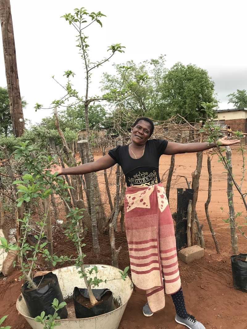 We did it! 50 baobab trees planted!