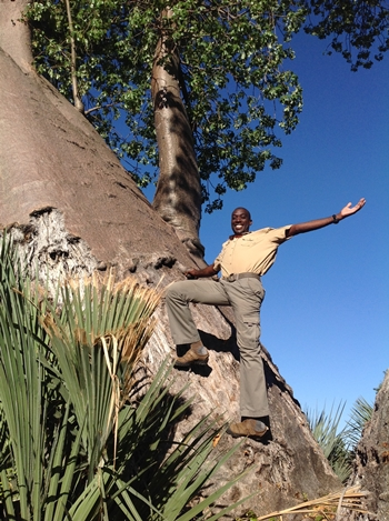 How baobab's heal themselves…